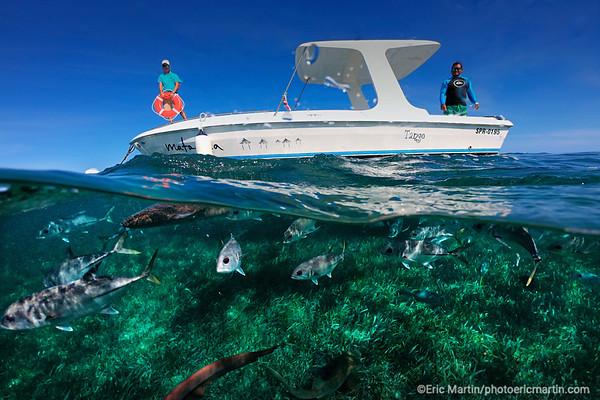 BELIZE. SAN PEDRO Réserve marine de Hol Chan