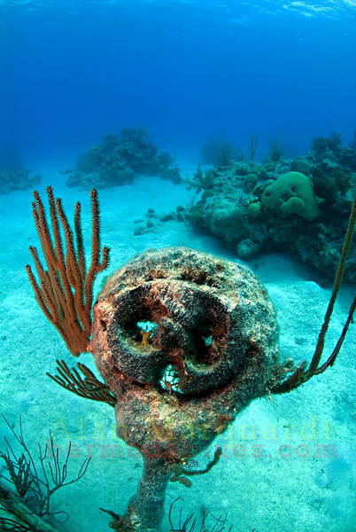 "One of the many ""dead eyes"" on the wreck of the North Carolina, 1880. <br /> Western reef, Bermuda, 2009."