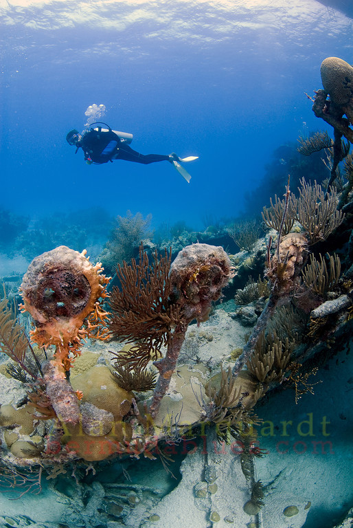 "Diver swims over the ""dead eyes"" of the North Carolina wrecked near Bermuda 1880. <br /> Western reef, Bermuda 2009."
