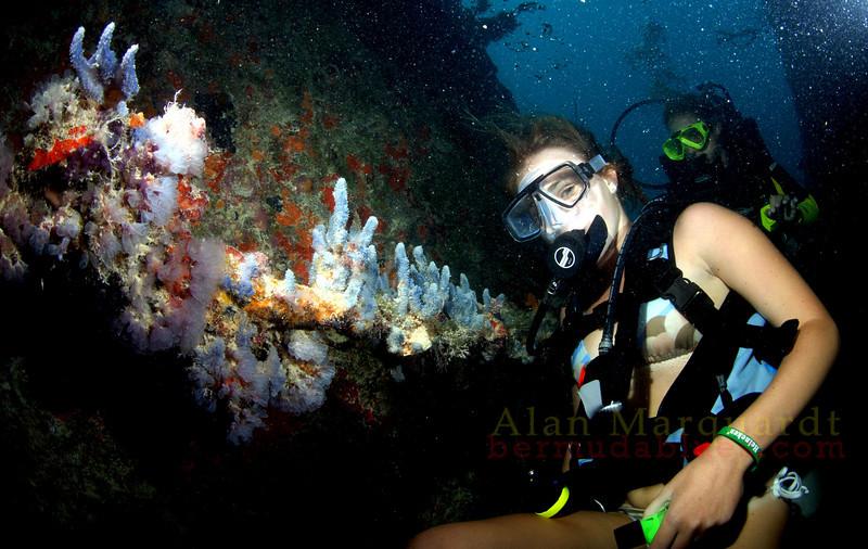 Divers explore the wreck of the Dredger, North shore, Bermuda.