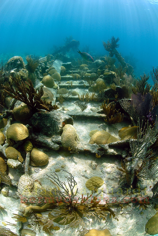 Wreck of the Darlinton which sunk in 1886, Bermuda