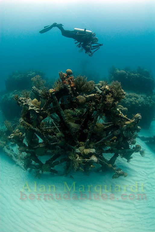 The wreck of the Mari Celeste (1864) was a civil war blockade runner, paddle wheeler steamer. Resting in 20 meters of water the 2 paddle wheels remain intact, one standing, the other fallen over, laying on the sandy bottom.<br /> South shore, Bermuda, 2009.