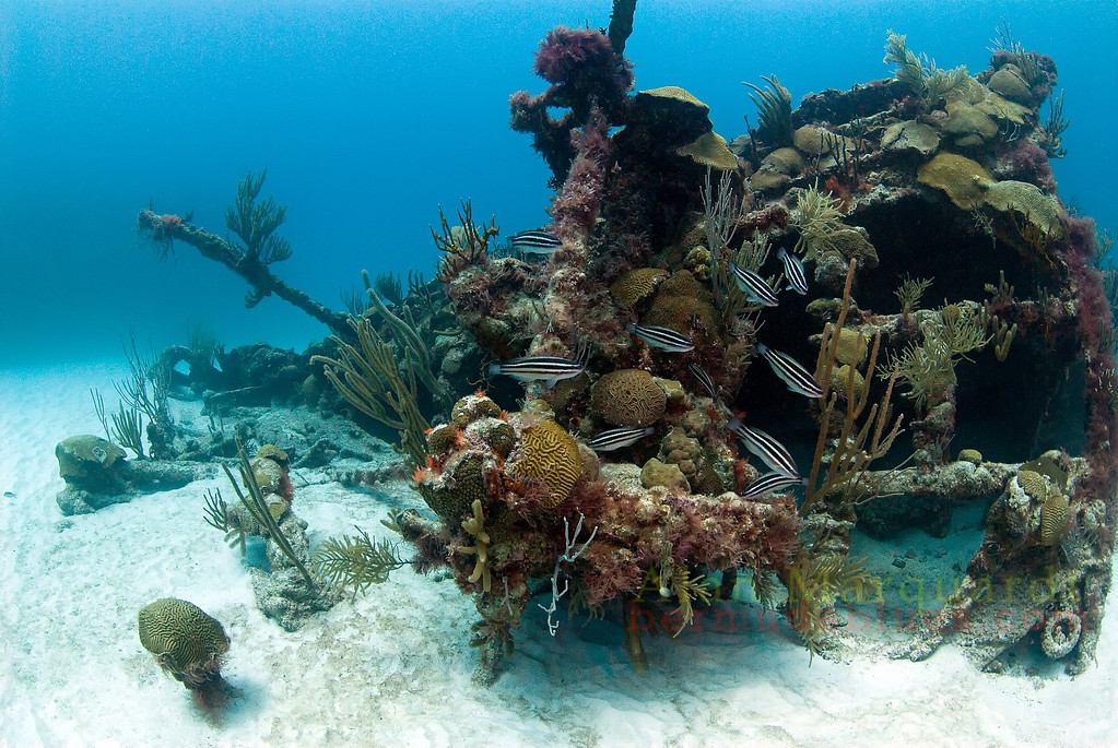 Bow section of the Mari Celeste, 1846.<br /> South shore, Bermuda, 2009.