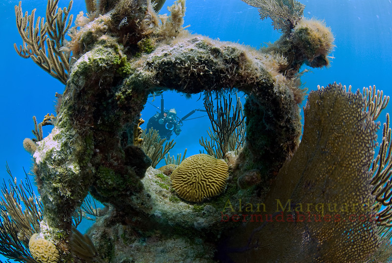 A diver looks thru the steel ring, on the end of the bowsprit of the, North Carolina. Sank Jan 1, 1880. West of Bermuda, 2009.