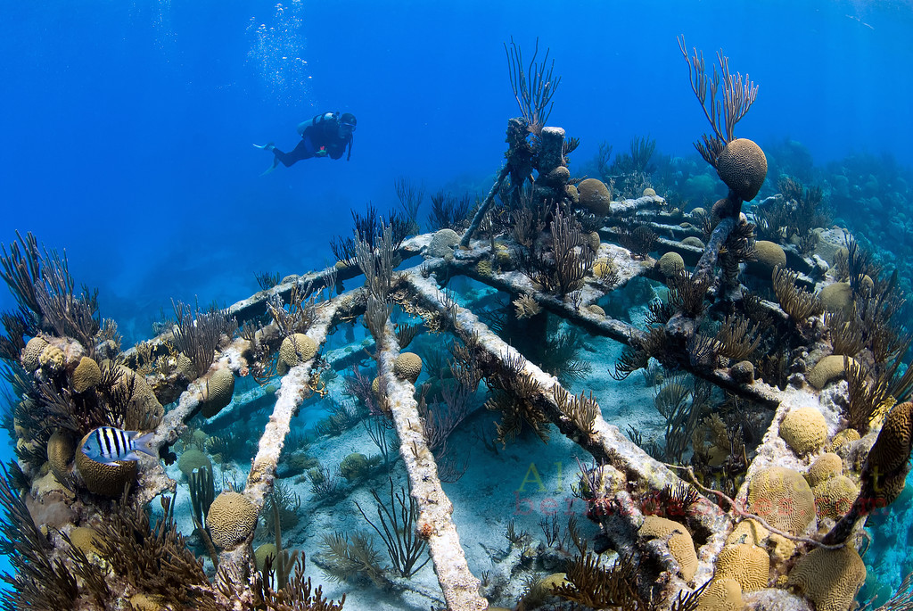 The stern section of the North Carolina (1880), sits on the reef, intact.<br /> Western reef, Bermuda, 2009.
