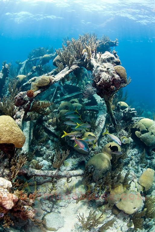 The Montana's (1863) paddle wheel lies on it's port side in 8 meters of water.<br /> Northwestern reef, Bermuda, 2009.
