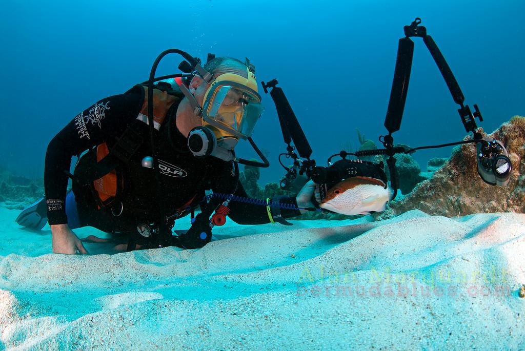 Coney and a diver. South Shore, Bermuda. 2009