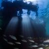 Southampton wrecks, Bermuda.