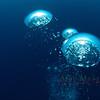Bubbles 2, Bermuda.