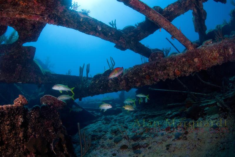 Minnie Breslauer, Bermuda (sunk 1873).