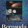 Only one image is mine on this cover of the Bermuda phone book. The red fish are mine.