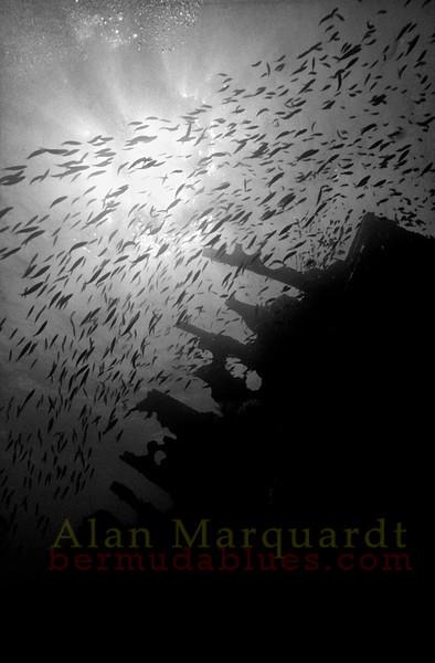 Schooling fish swim over the bow of the wreck Iristo (sunk 1937).