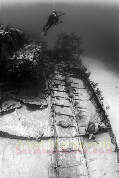The wreck of the Mari Celeste (1864).<br /> South shore, Bermuda, 2009.