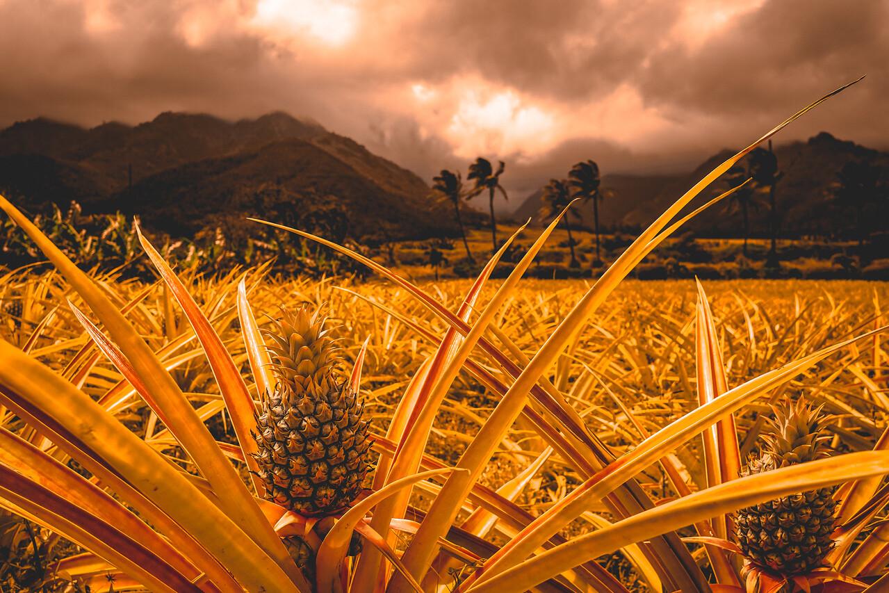 Maui Gold