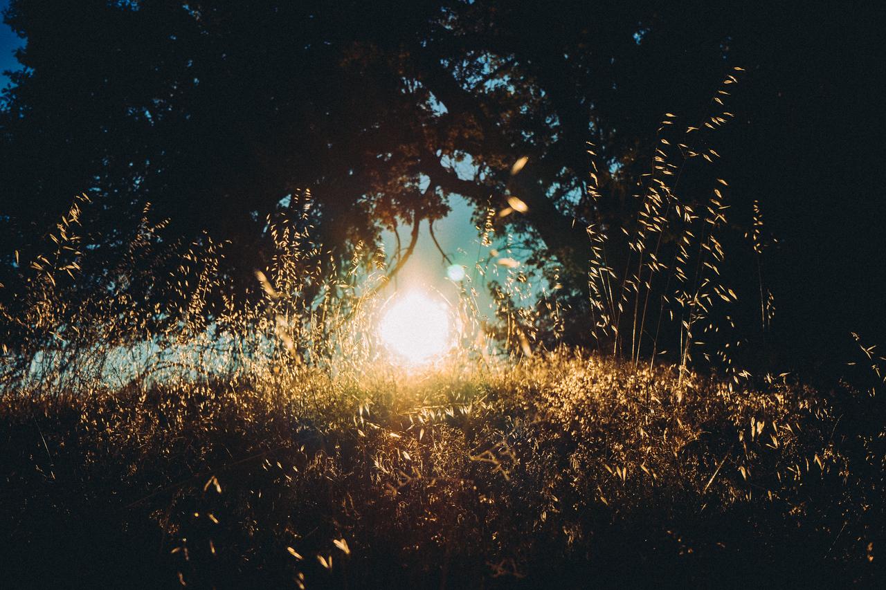Field Light