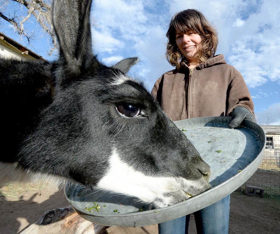 Mountain Flower Goat Dairy