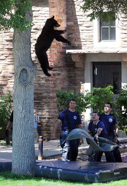 Bear Fall100  Bear Fall100Bear Fall100Bear Fall100Bear Fall100