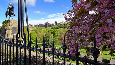Princes Street Gardens, cherry blossoms