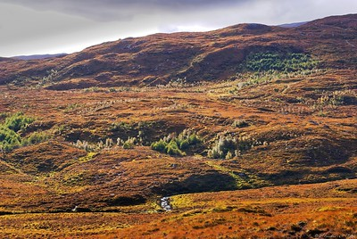 Autumn heathland colours near Loch Seaforth