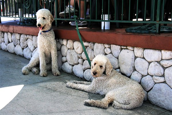 More French Poodles, so it must be France