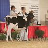 BigE2016_Holstein_IMG_3968