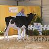 BigE2016_Holstein_IMG_3981
