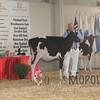 BigE2016_Holstein_IMG_3971