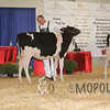 BigE2016_Holstein_IMG_3978