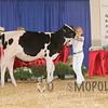BigE2016_Holstein_IMG_3974
