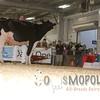 BigE2016_Holstein_IMG_4726