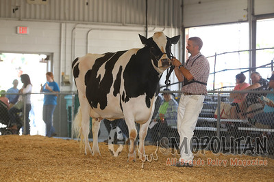 Big E Holstein Int Cows 2016