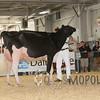BigE2016_Holstein_IMG_4724