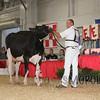 BigE2016_Holstein_IMG_4730