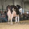 BigE2016_Holstein_IMG_5335