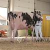 BigE2016_Holstein_IMG_5330