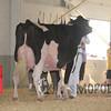 BigE2016_Holstein_IMG_5326