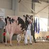 BigE2016_Holstein_IMG_5321