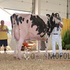 BigE2016_Holstein_IMG_5328