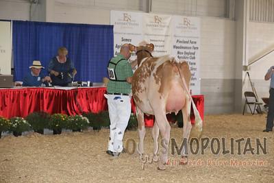 Big E Red Holstein Cows 2016