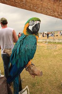 Bikelahoma Fans 2 2009_0418-024