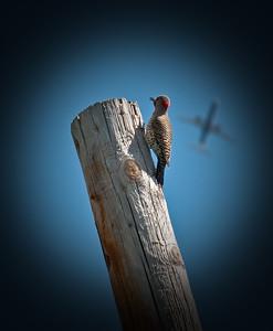 Woody & The Plane