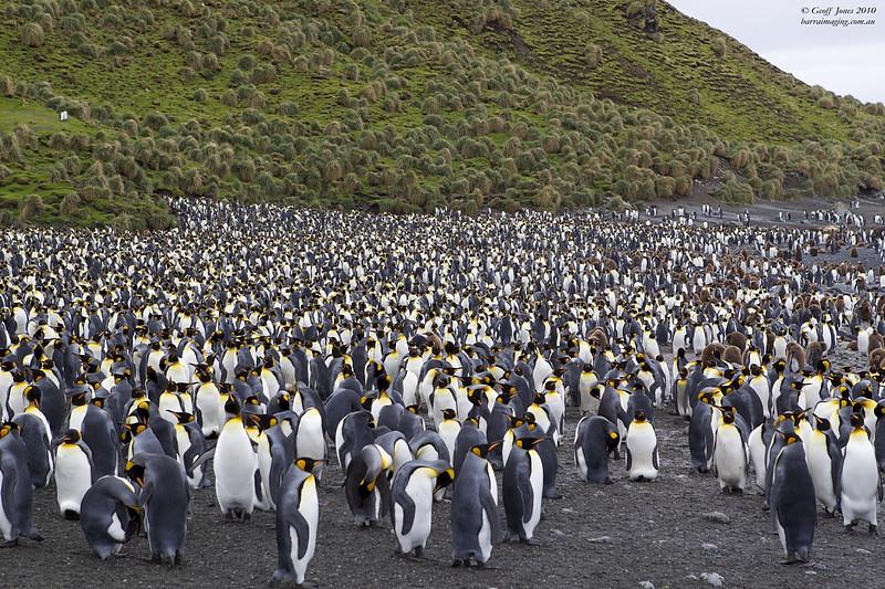 King Penguin where's wally ?