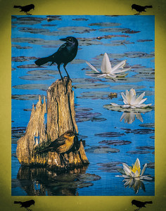 PAIR GRACKLES FISHING