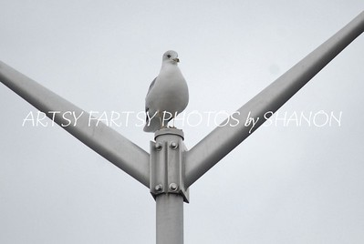 one seagul on pole