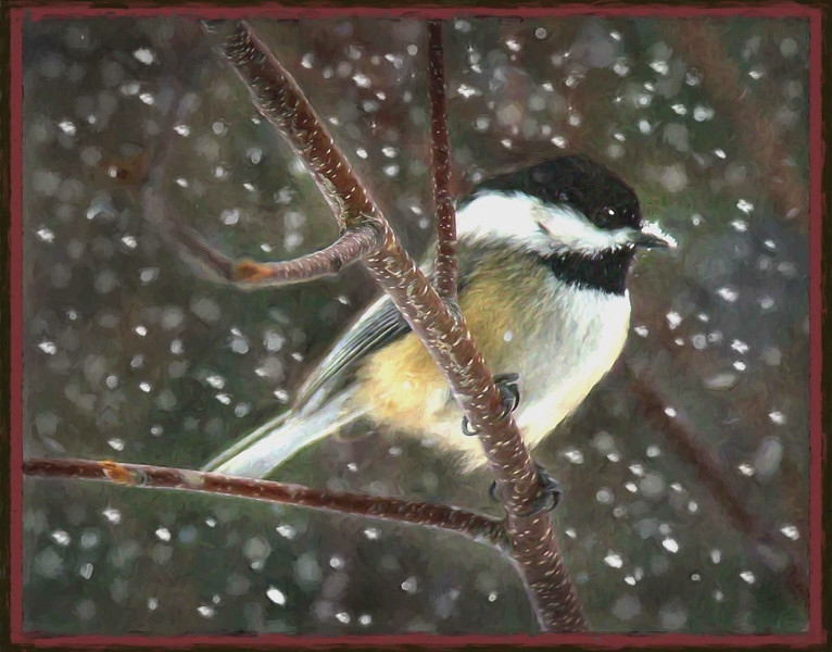 snow chickadee #2