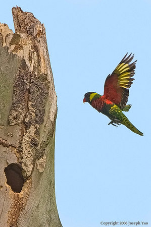 BIRDS IN ACTION