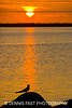 ARCTIC TERN AT SUNSET.<br /> <br /> Known for their pugnacious attacks near their nest sites, and tireless long-distance migrations, it's a treat to see a tern at rest.