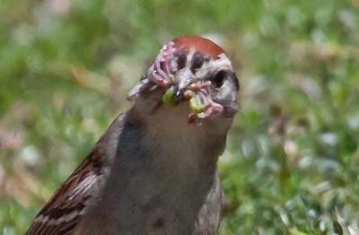 Maine, bird, nature, wildlife, photograph, photography