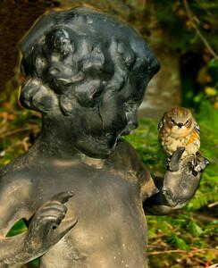 """Yellow-rumped, """"Myrtle"""" warbler on garden statue, Phippsburg Maine"""