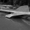 "Antique Packard, hood ornament and grill detail, Maine antique car. Black and White, ""Bird of the day"", 1953"